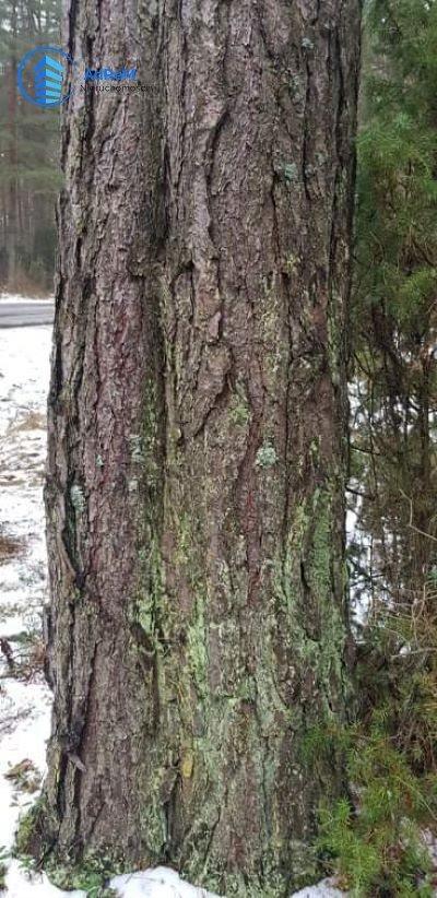 Działka leśna na sprzedaż Olszowa Droga  20000m2 Foto 3