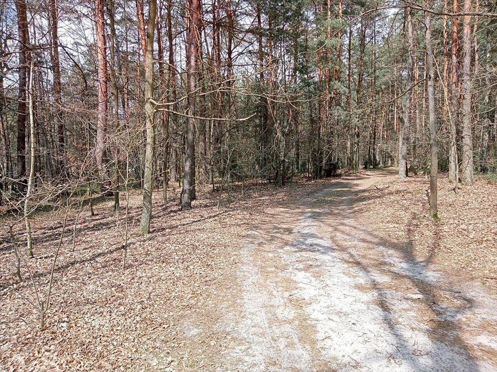Działka rolna na sprzedaż Wola Karczewska, Wiązowna  6000m2 Foto 5