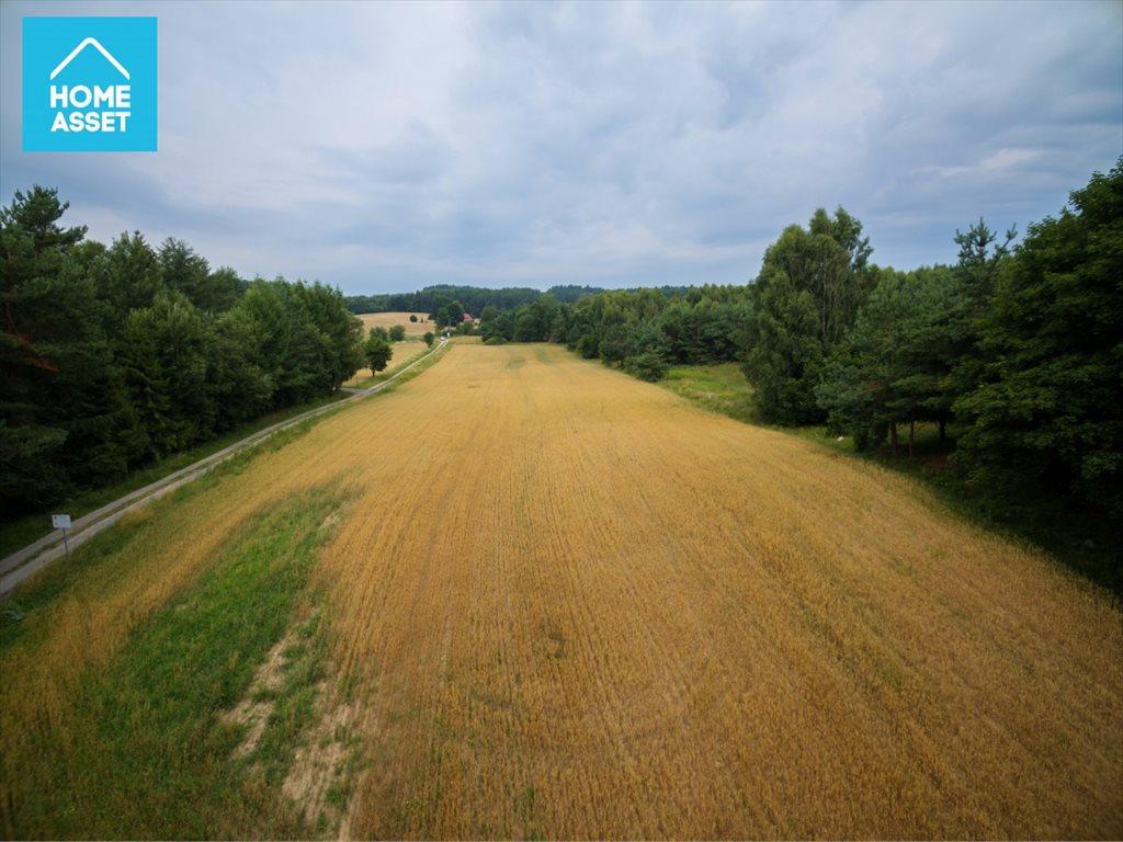 Działka rolna na sprzedaż Błotnia  9300m2 Foto 9