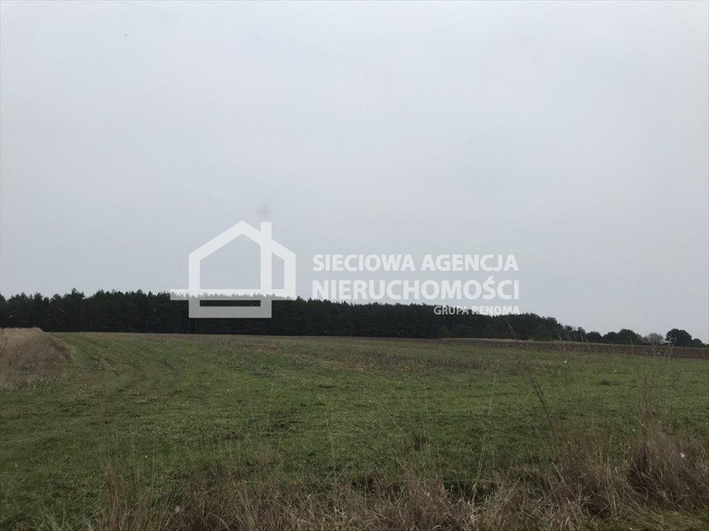 Działka rolna na sprzedaż Sasino  12100m2 Foto 7