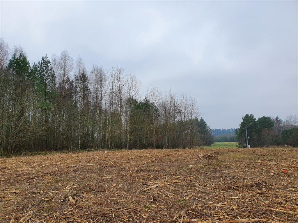 Działka rolna na sprzedaż Donimierz, Mgieł Porannych  3004m2 Foto 3