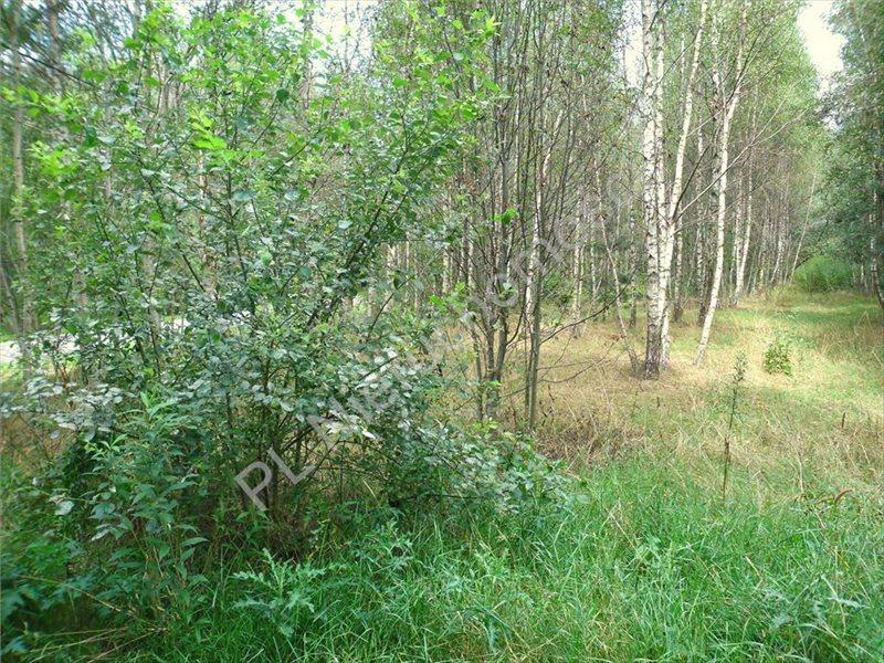 Działka leśna na sprzedaż Izabelin  27242m2 Foto 5