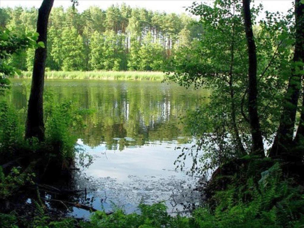 Działka leśna na sprzedaż Dopiewo, Dopiewo  28276m2 Foto 2