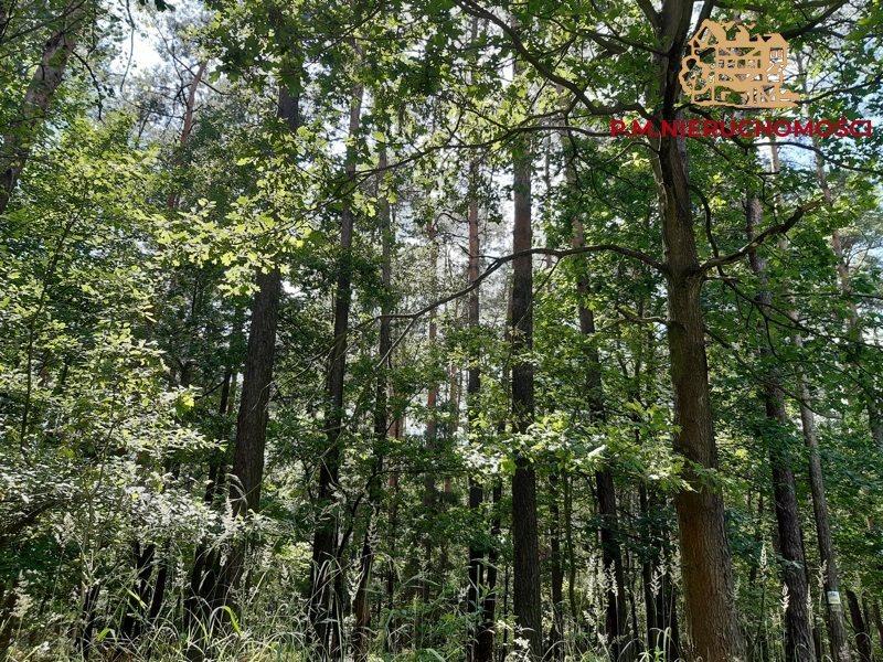 Działka leśna na sprzedaż Rybnik, Ochojec  4600m2 Foto 2