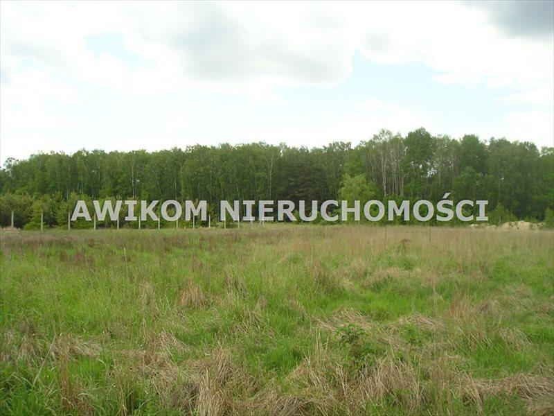 Działka rekreacyjna na sprzedaż Joachimów-Mogiły  3000m2 Foto 1