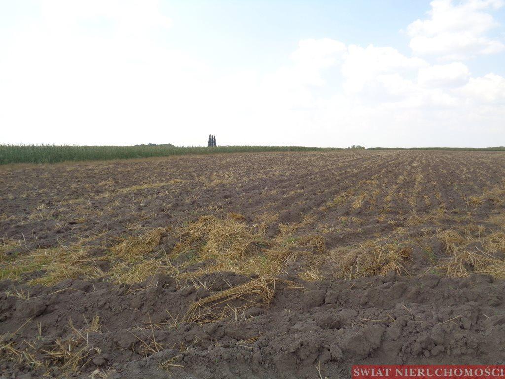 Działka siedliskowa na sprzedaż Smolec  16612m2 Foto 2