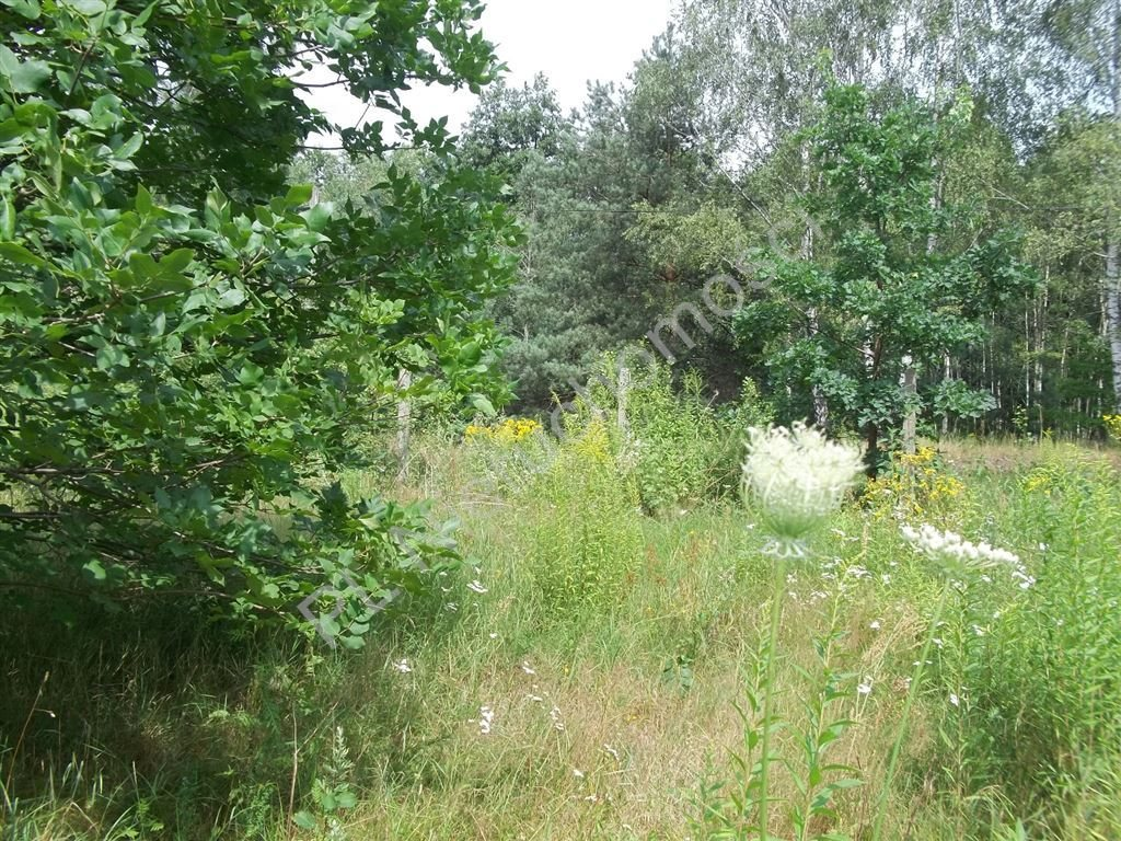 Działka siedliskowa na sprzedaż Halinów  16900m2 Foto 2