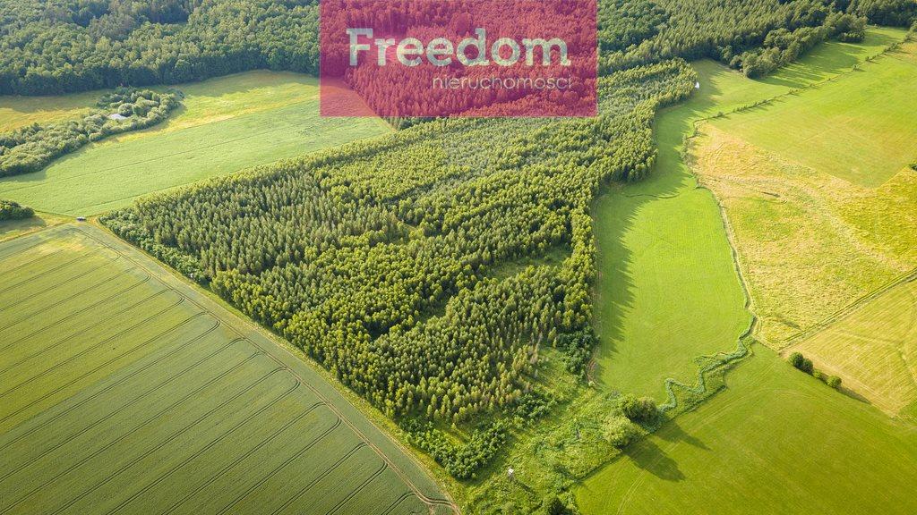 Działka leśna na sprzedaż Parys  93000m2 Foto 5