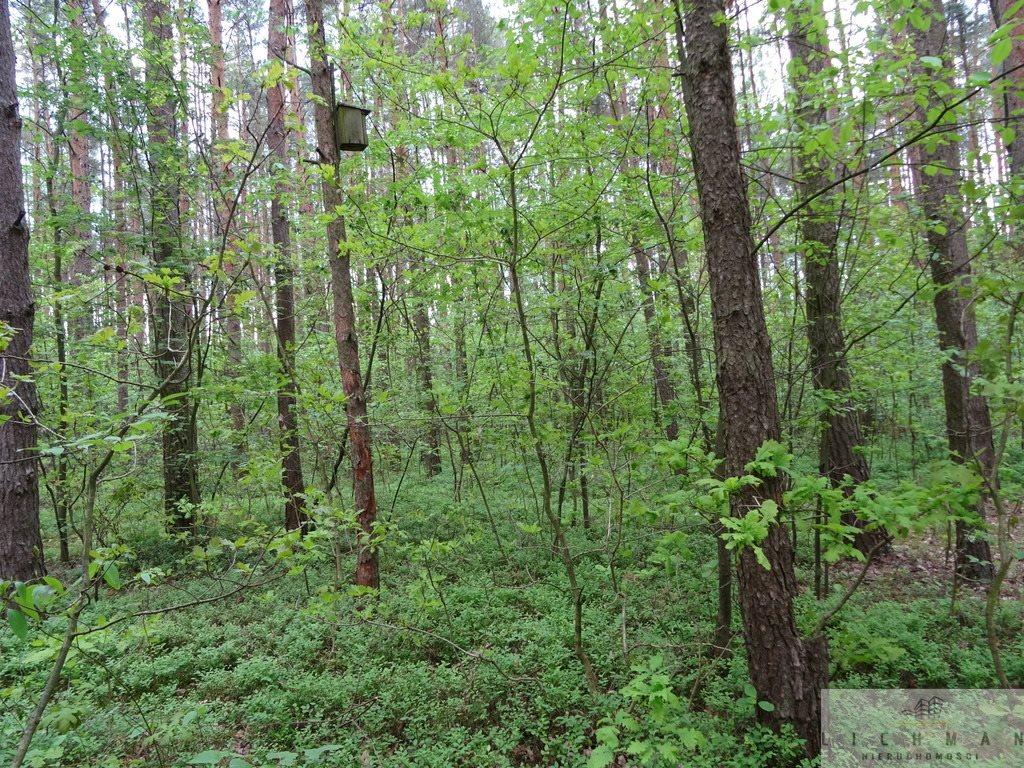 Działka leśna z prawem budowy na sprzedaż Kwiatkowice-Las  2420m2 Foto 6