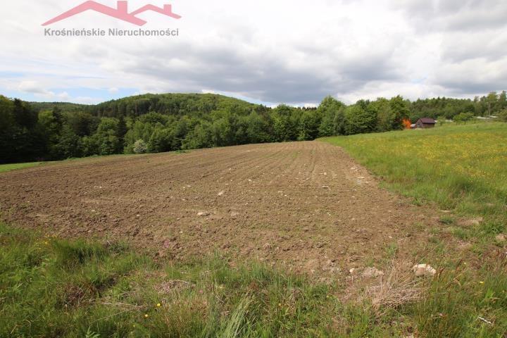 Działka rolna na sprzedaż Korczyna  3000m2 Foto 1