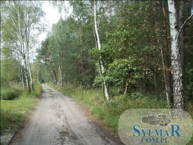 Działka leśna na sprzedaż Ostrybór, Ostrybór  27900m2 Foto 2