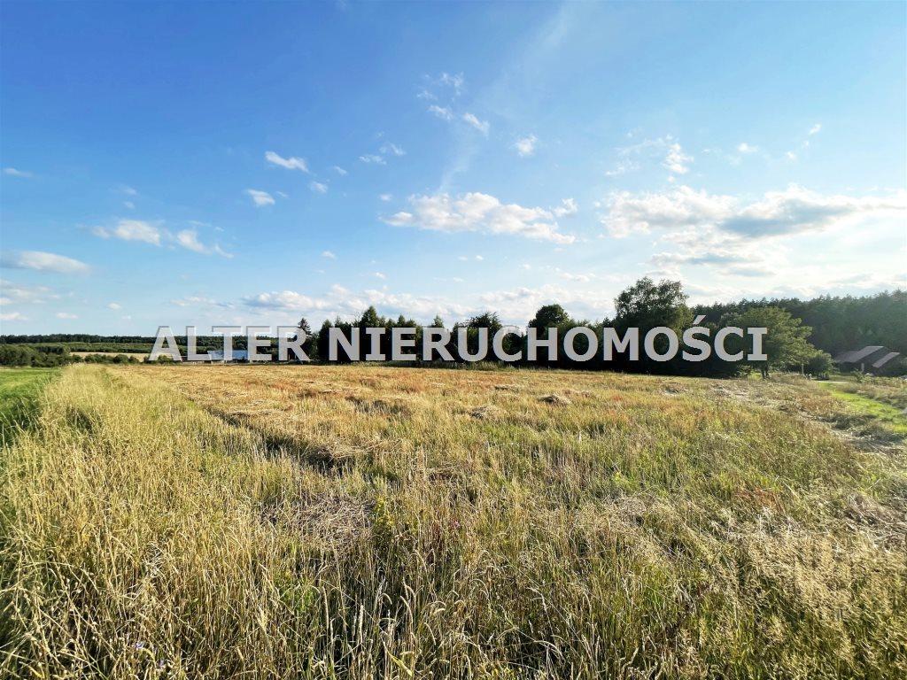 Działka rolna na sprzedaż Pawełki  8300m2 Foto 3