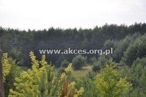 Działka leśna na sprzedaż Różan  13047m2 Foto 2