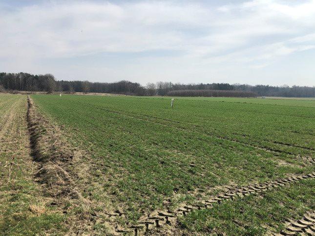 Działka rolna na sprzedaż Połomia  10300m2 Foto 9