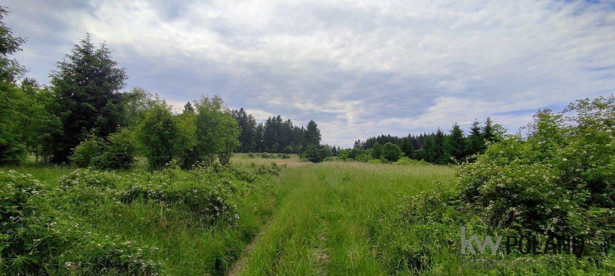 Działka rolna na sprzedaż Kudowa-Zdrój, Pstrążna  7250m2 Foto 5