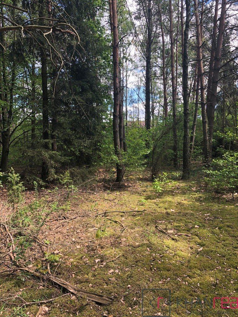 Działka leśna z prawem budowy na sprzedaż Izabelin C, Krótka  1451m2 Foto 3