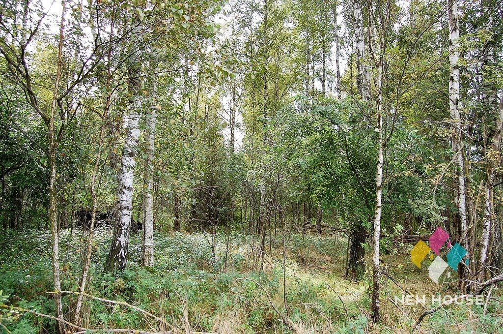Działka rolna na sprzedaż Przykop  5100m2 Foto 4