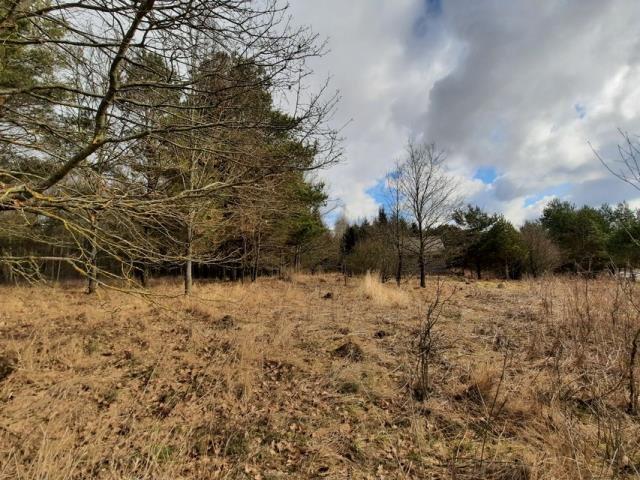 Działka leśna na sprzedaż Grądzkie  1404m2 Foto 7