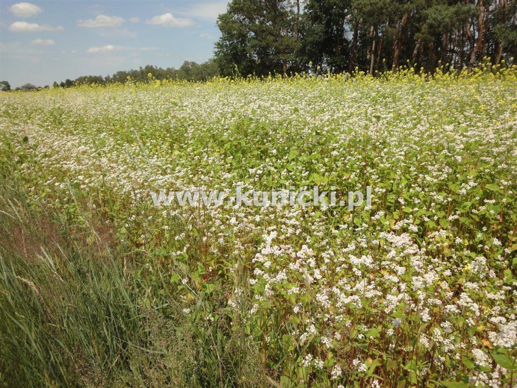Działka budowlana na sprzedaż Przyborowice Górne  6250m2 Foto 1