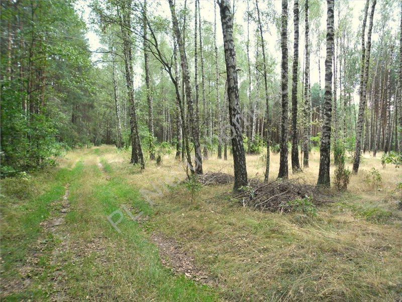 Działka leśna na sprzedaż Izabelin  27242m2 Foto 9