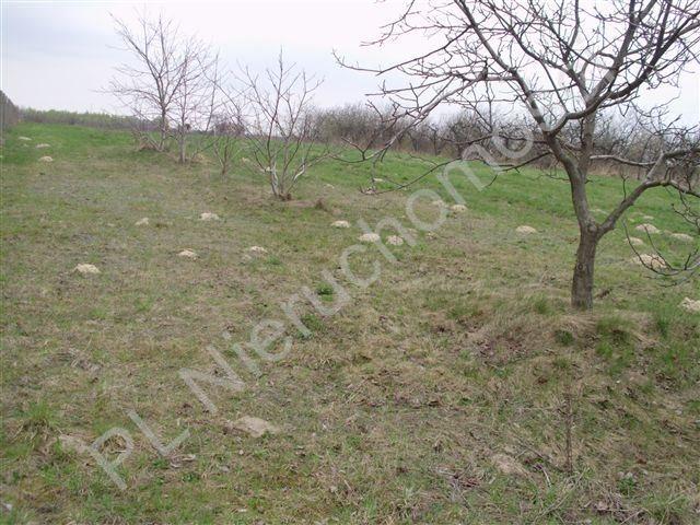 Działka rolna na sprzedaż Jeziora-Nowina  1000m2 Foto 2