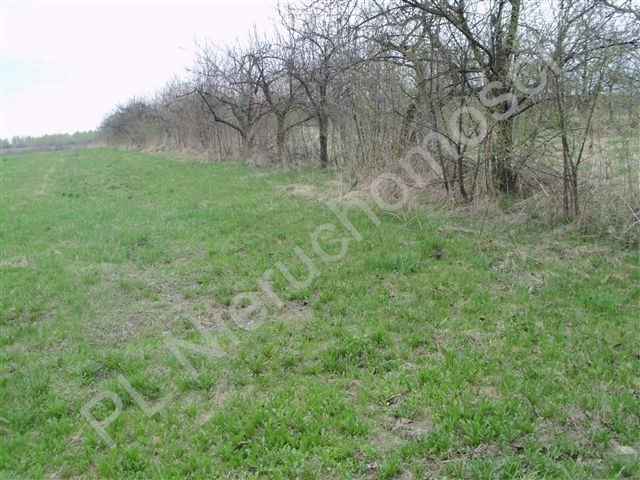 Działka rolna na sprzedaż Jeziora-Nowina  1000m2 Foto 3