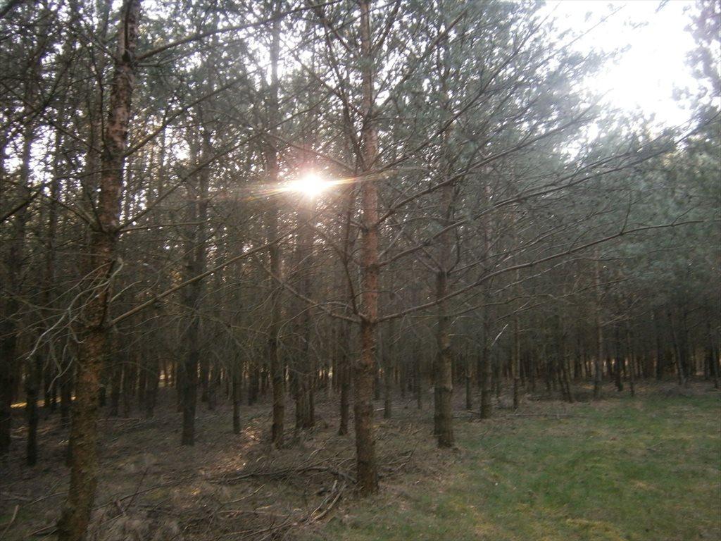 Działka leśna na sprzedaż Stara Wiśniewka  55661m2 Foto 3