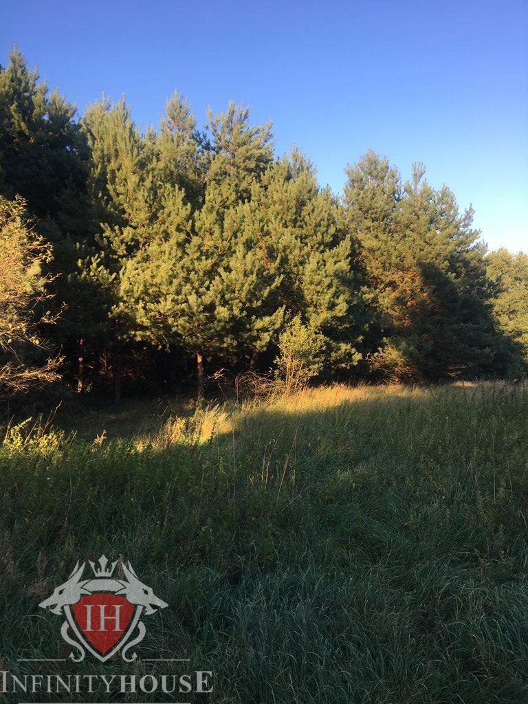 Działka rolna na sprzedaż Skrzeszew  27000m2 Foto 4