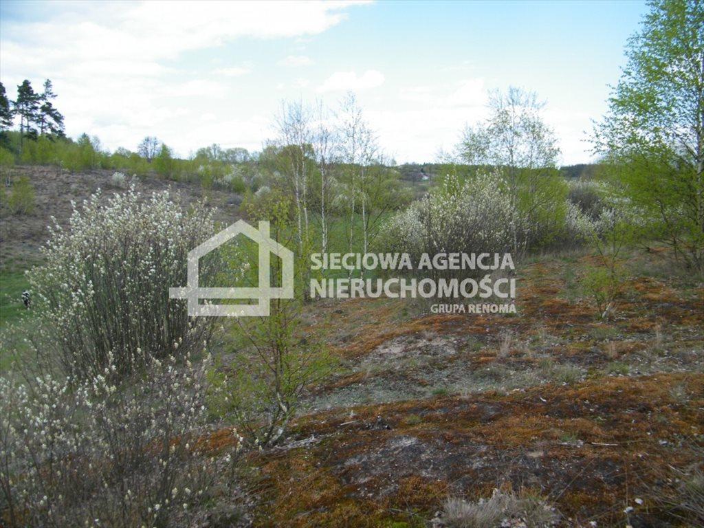 Działka leśna na sprzedaż Huta Kalna  20250m2 Foto 4
