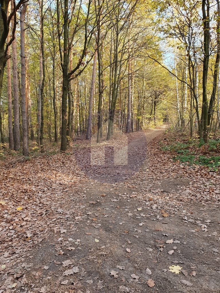 Działka leśna na sprzedaż Sobótka, Przełęcz Tąpadła  2551m2 Foto 1