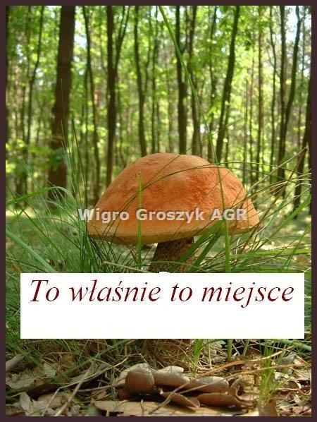 Działka leśna na sprzedaż Stanisławów  3076m2 Foto 1