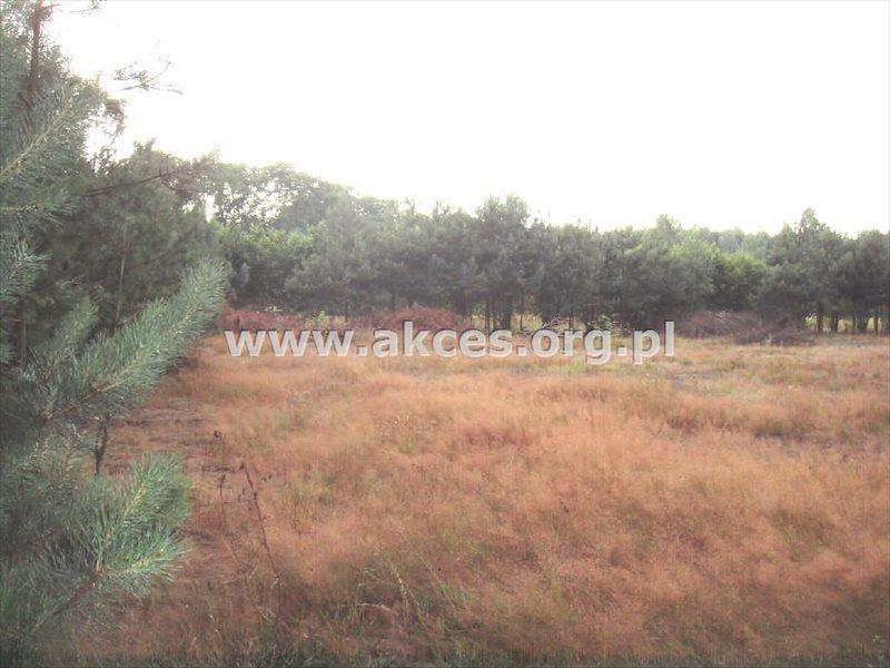 Działka budowlana na sprzedaż Korzeniówka  12850m2 Foto 2