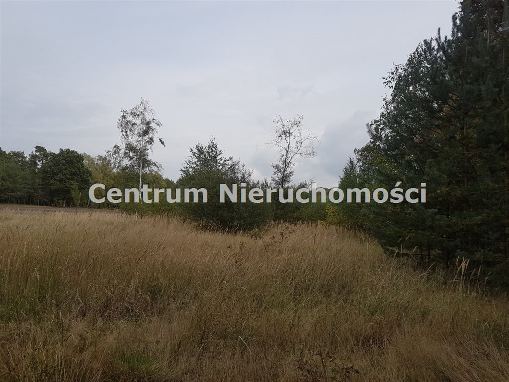 Działka leśna na sprzedaż Bałdrzychów  21000m2 Foto 6
