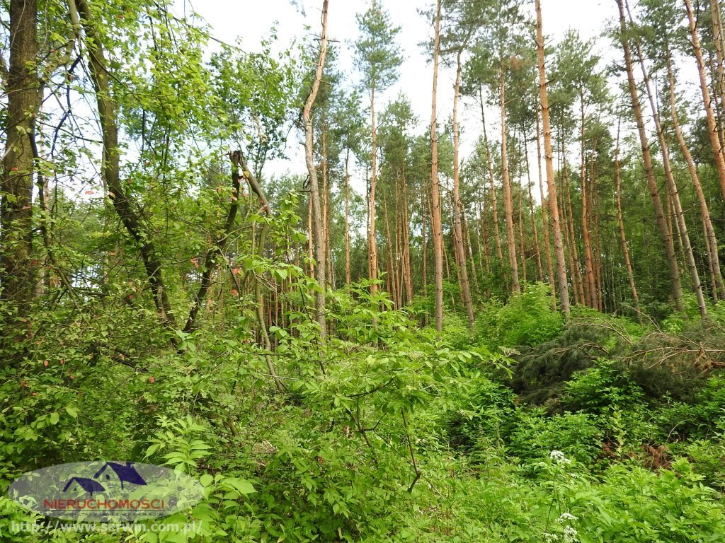 Działka leśna na sprzedaż Sieradza  7700m2 Foto 3