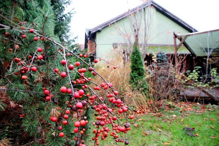 Dom na sprzedaż Mosina  83m2 Foto 1