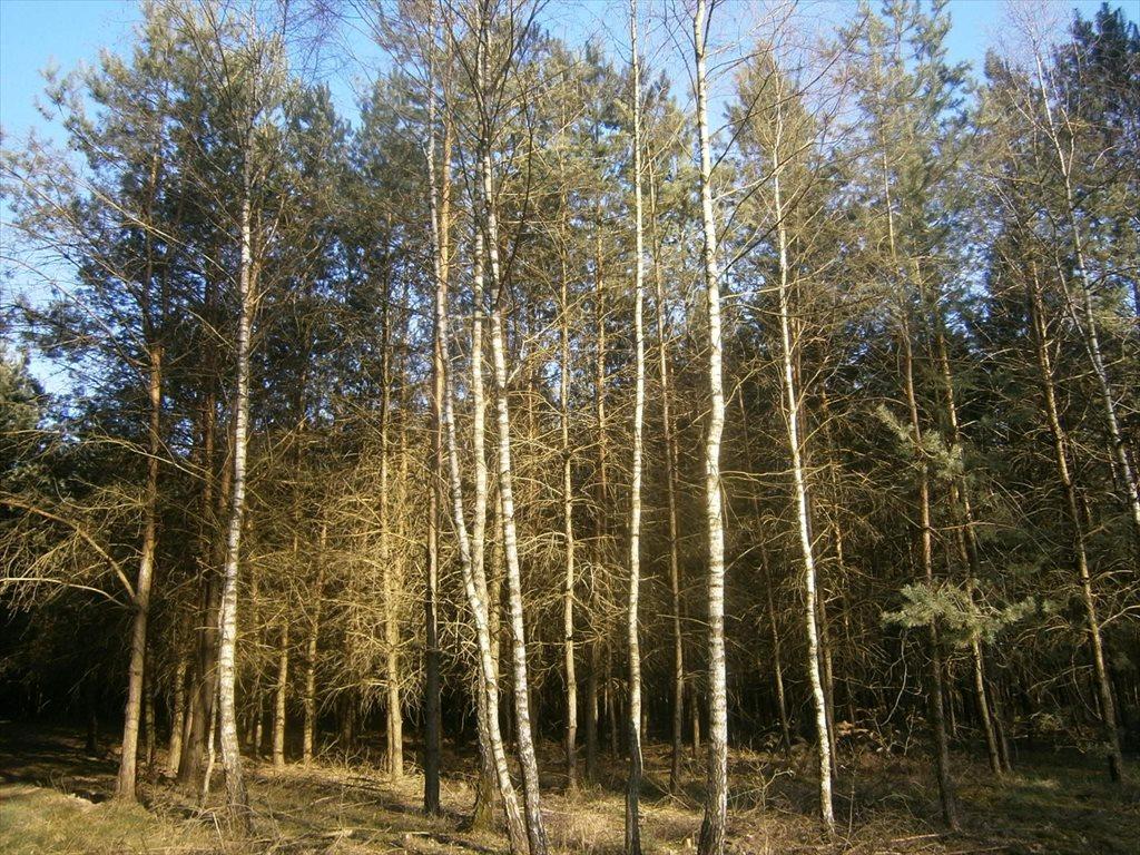 Działka leśna na sprzedaż Stara Wiśniewka  55661m2 Foto 8
