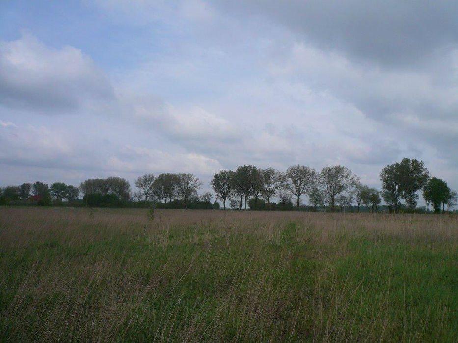 Działka inwestycyjna na sprzedaż Kolonia Bolimowska-Wieś  49600m2 Foto 4