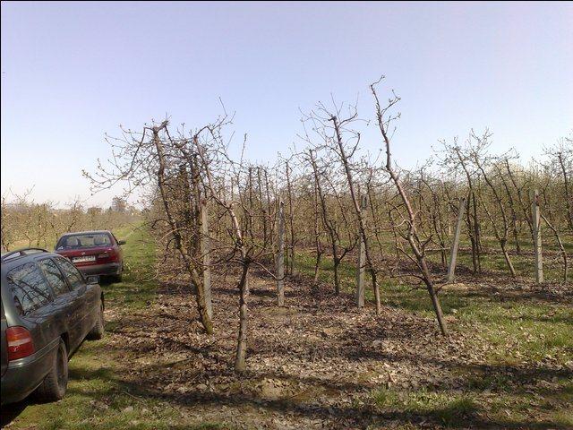 Działka rolna na sprzedaż Radwanków Szlachecki  8100m2 Foto 1