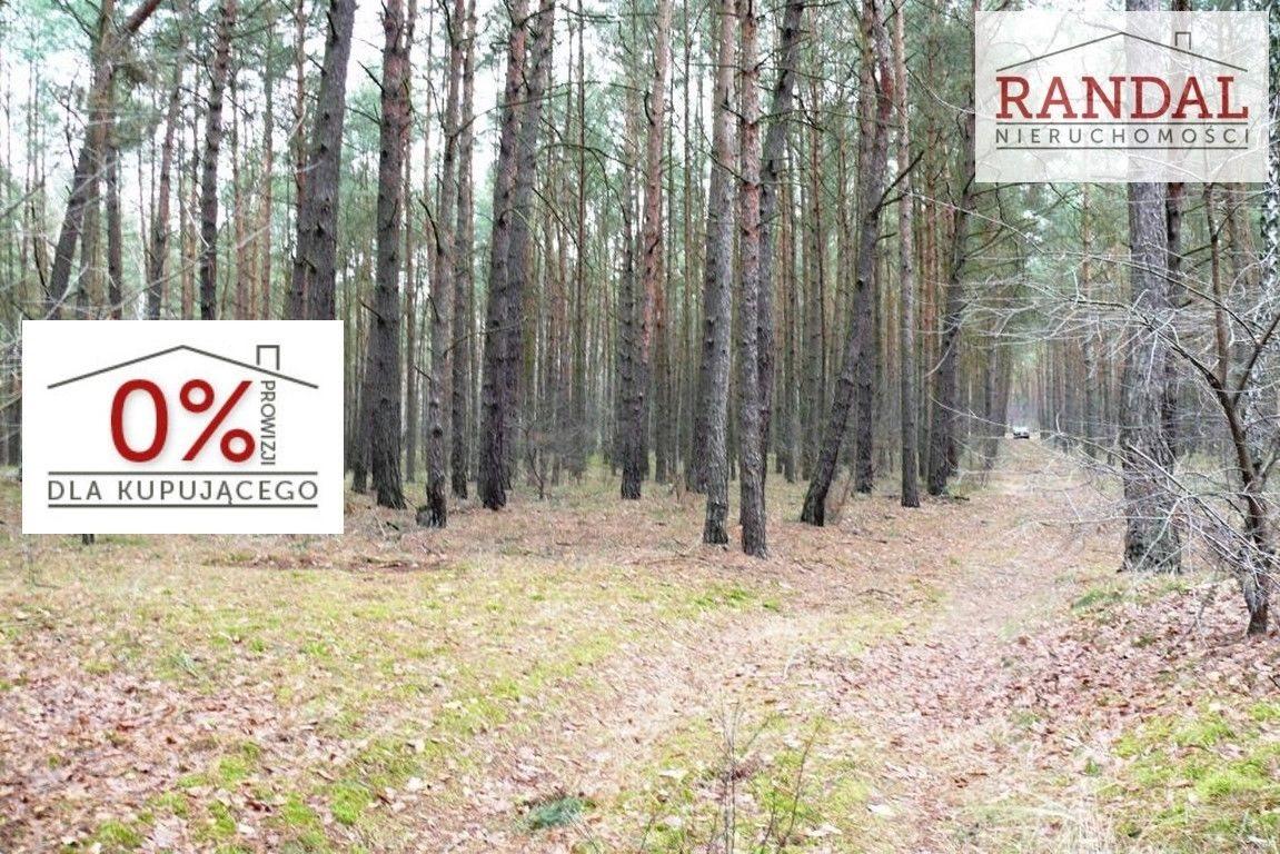 Działka leśna na sprzedaż Młodzikówko  107010m2 Foto 1
