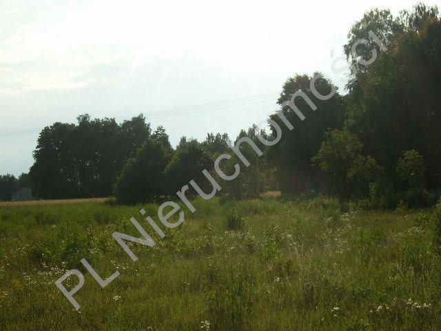 Działka rolna na sprzedaż Stare Budy  1500m2 Foto 4