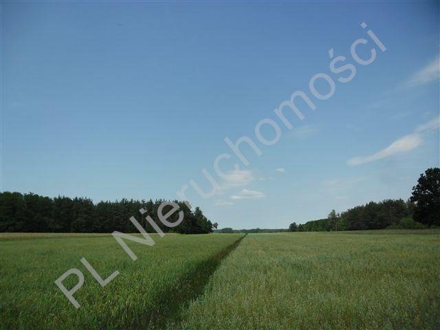 Działka rolna na sprzedaż Stanisławów  4567m2 Foto 3