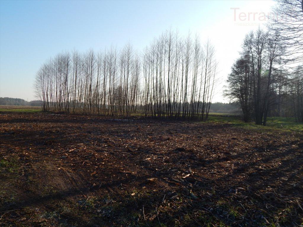 Działka rolna na sprzedaż Pogorzelec  1400m2 Foto 2