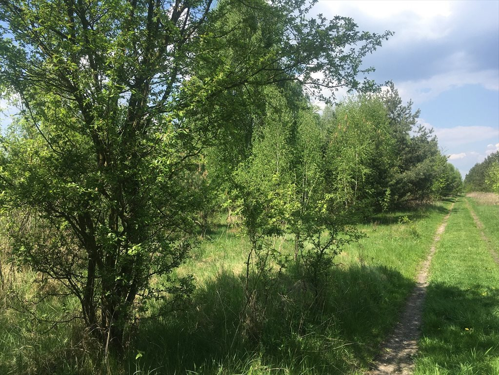 Działka rolna na sprzedaż Stare Babice, Wojcieszyn  1000m2 Foto 1
