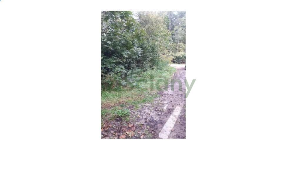 Działka leśna z prawem budowy na sprzedaż Książenice  4000m2 Foto 5