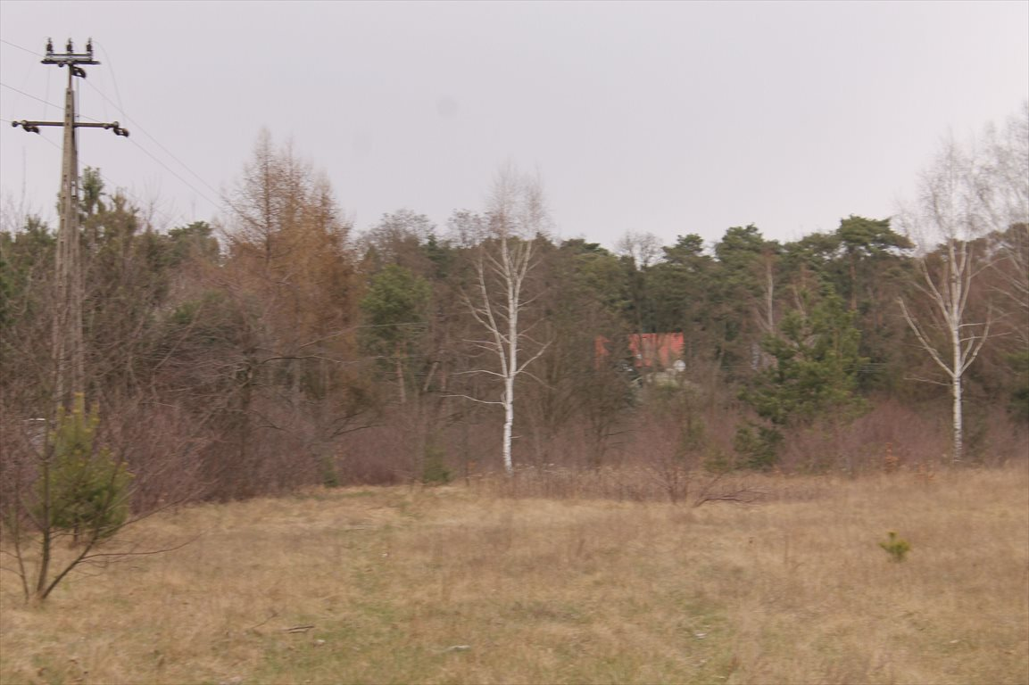 Działka rolna na sprzedaż Konstantynów Łódzki, Żabiczki  11000m2 Foto 1