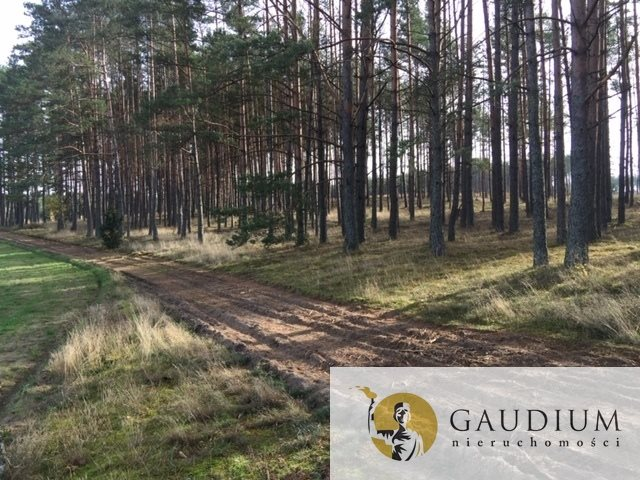 Działka leśna na sprzedaż Klocek  60000m2 Foto 6