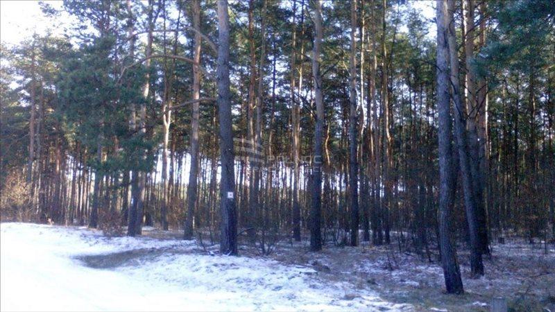 Działka leśna na sprzedaż Żdżary  36600m2 Foto 4