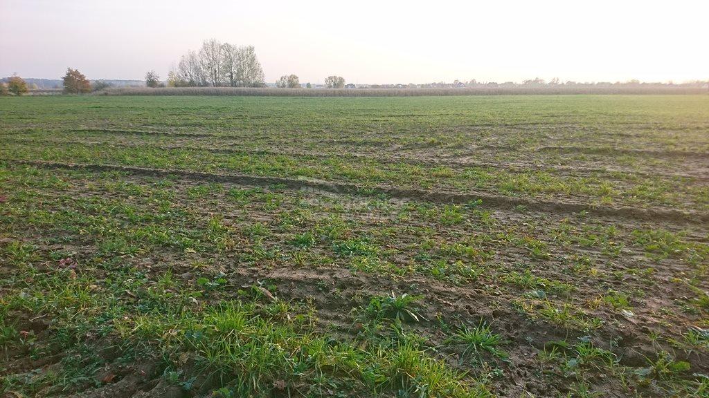 Działka rolna na sprzedaż Pęgów, Działka pod lasem w Pęgowie  3000m2 Foto 3
