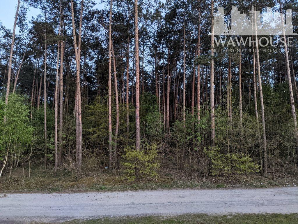 Działka leśna na sprzedaż Wodzinek  24100m2 Foto 3