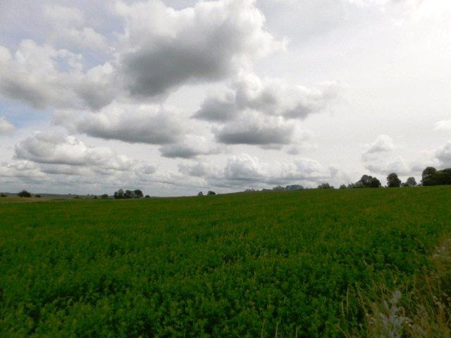 Działka rolna na sprzedaż Szczepanki  92900m2 Foto 6